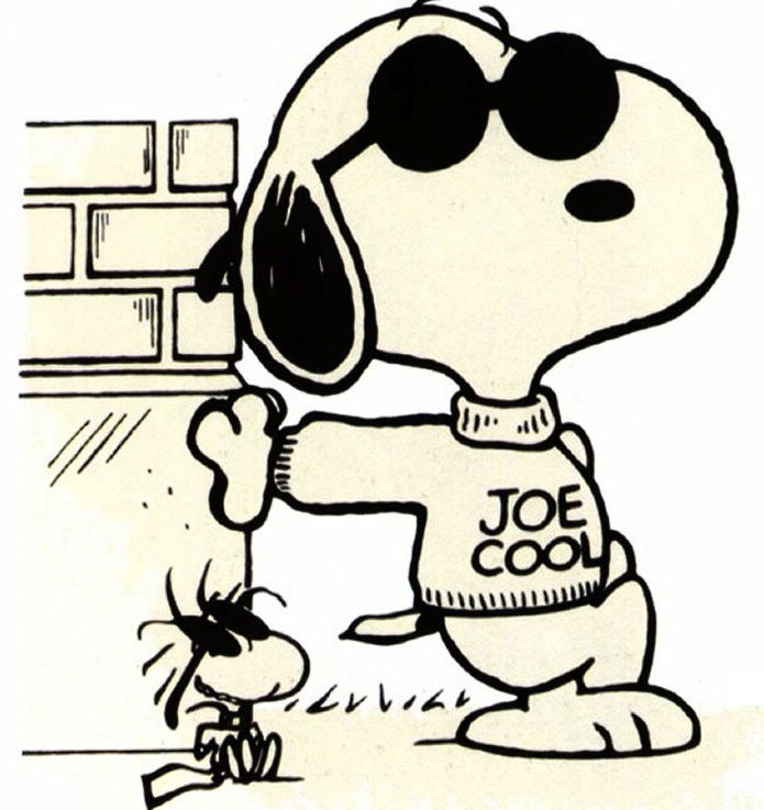 Joe Cool net worth